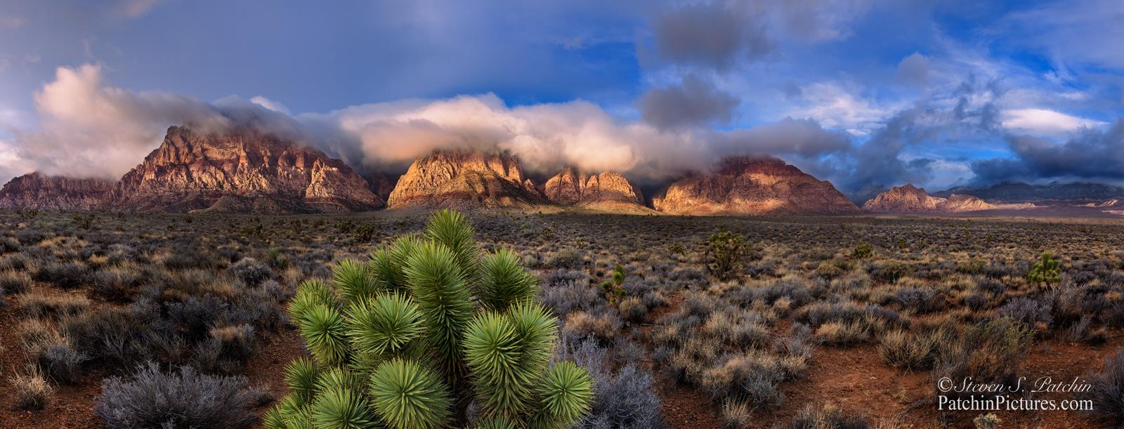 Red Rock Yucca Sunrise