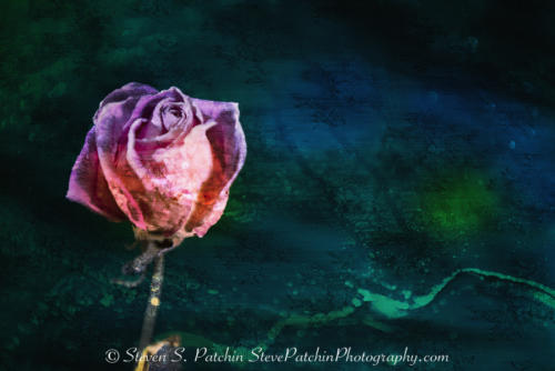Rose and Fabric